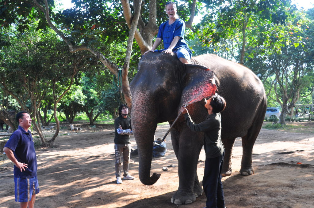 Elephant mahout training camp in Chiang Mai, Thailand