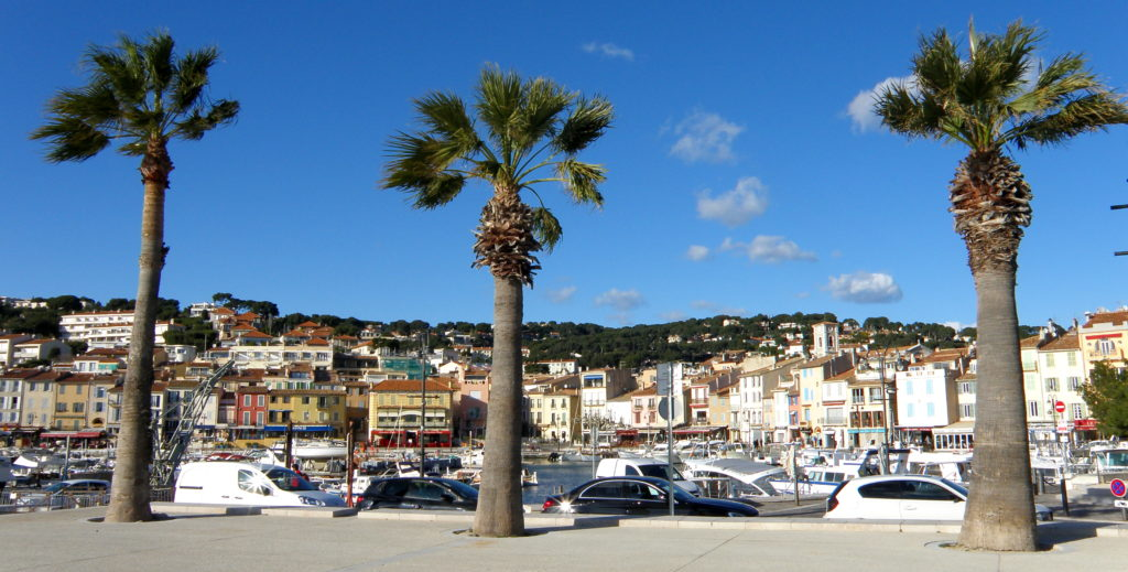 palm trees in cassis france